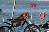 Most cyclists don't have quite THIS problem with dogs . . .