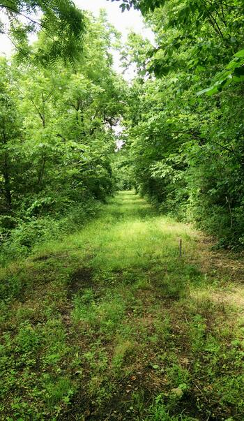 Preserved section of the old Butterfield Trail near Clever, MO